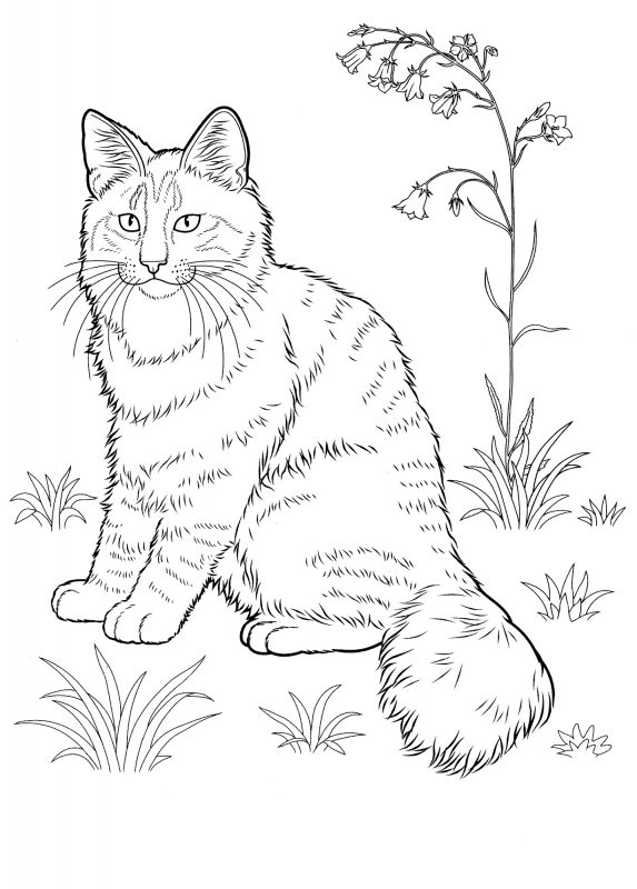 Look Real Cat Coloring Pages