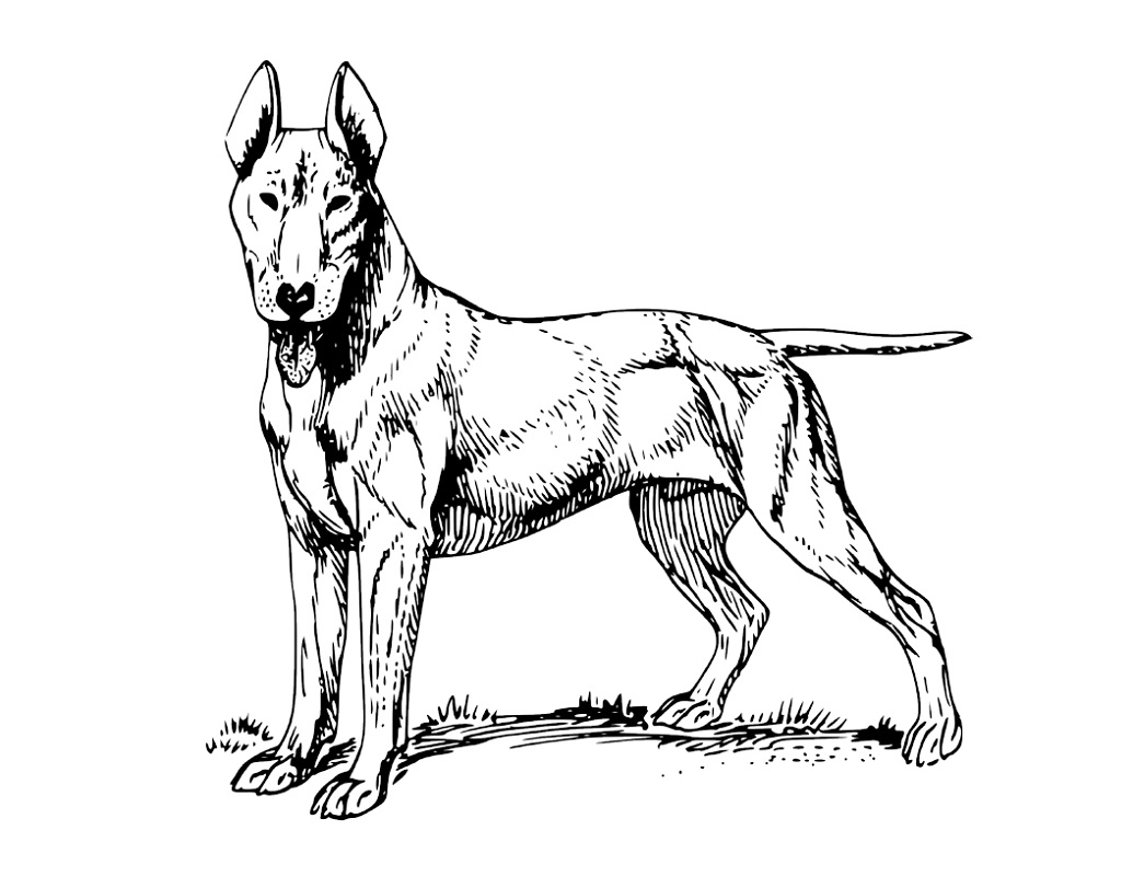 Realistic Dog Coloring Pages - Learning Printable