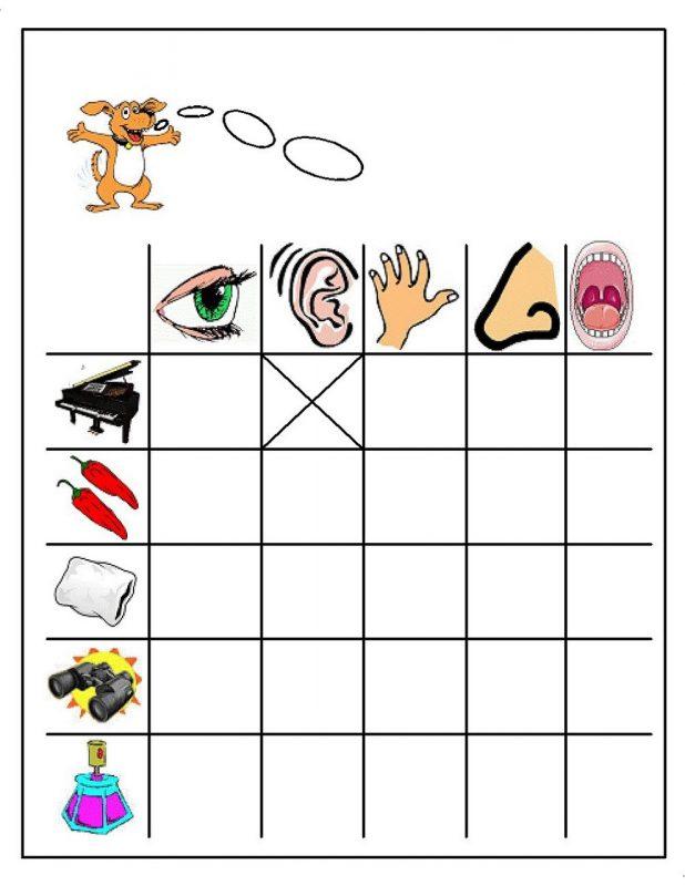 activities for the five senses for preschool fun