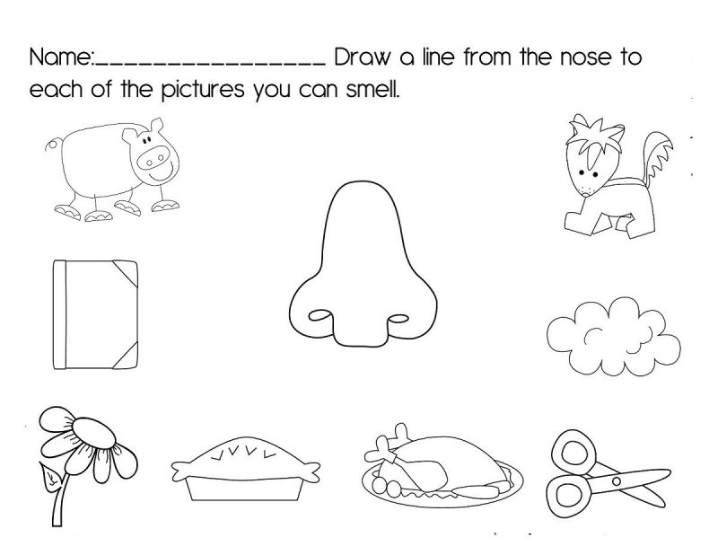 activities for the five senses for preschool printable