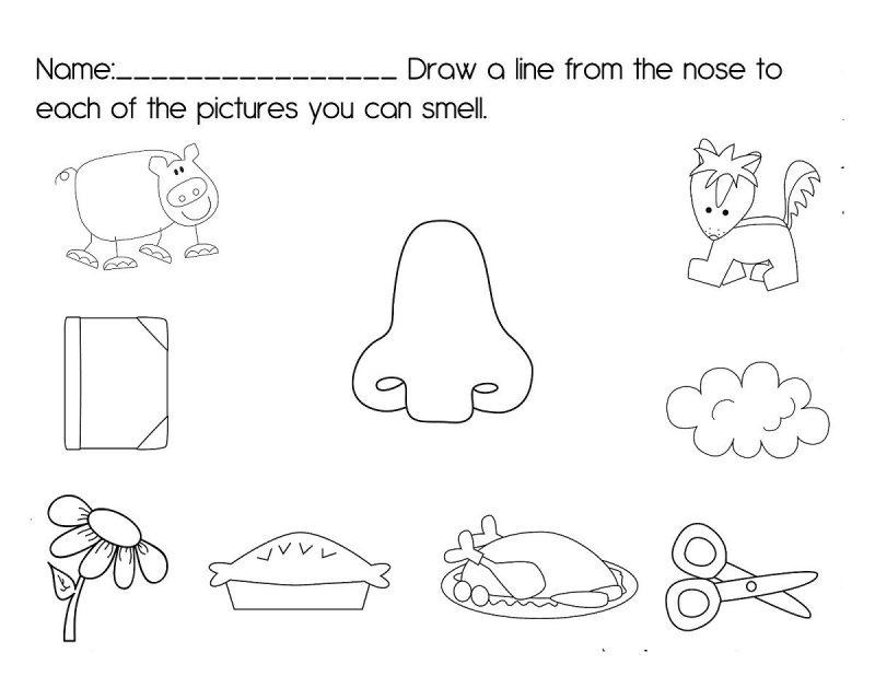 activities for the five senses for preschool printable