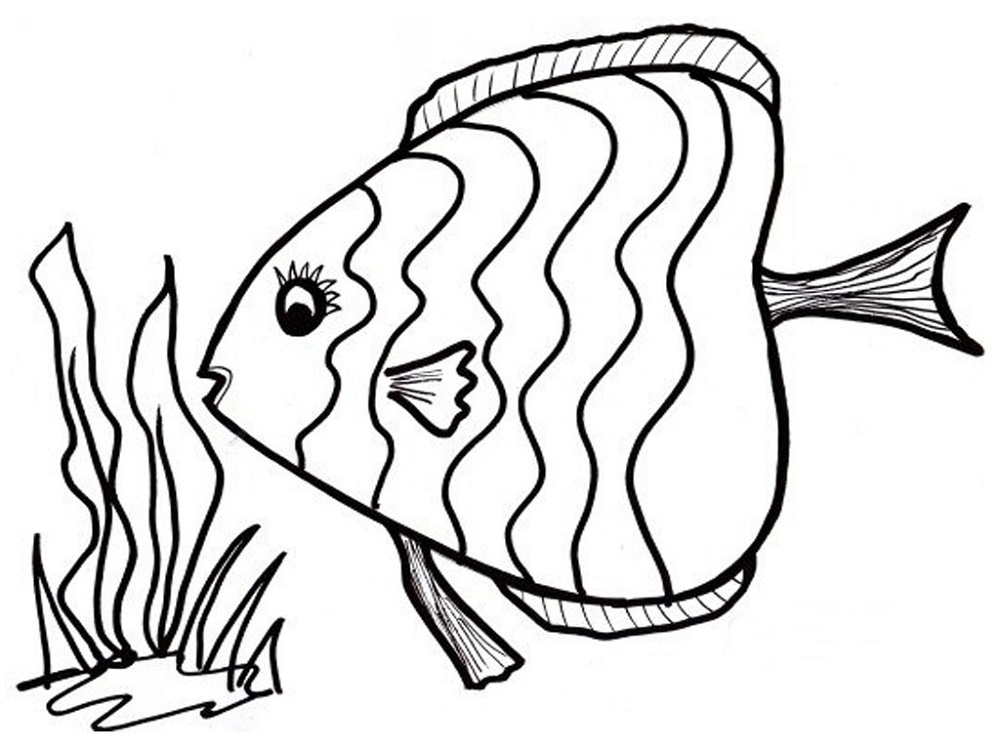 colouring pages fish and seaweed