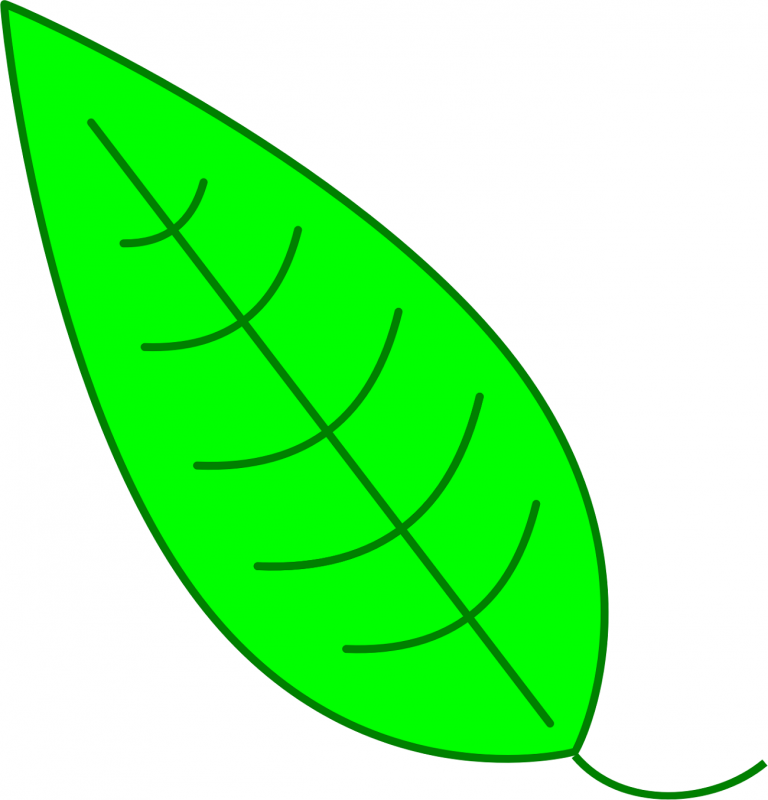 green images of leaf for kids clip art