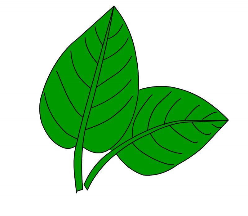 images of leaf for kids green