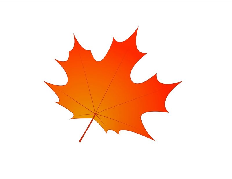 images of leaf for kids maple