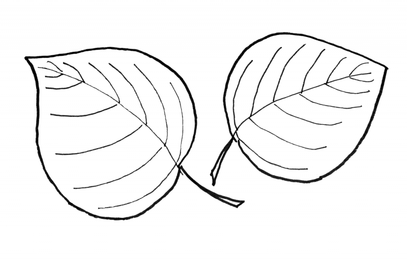 images of leaf for kids to color