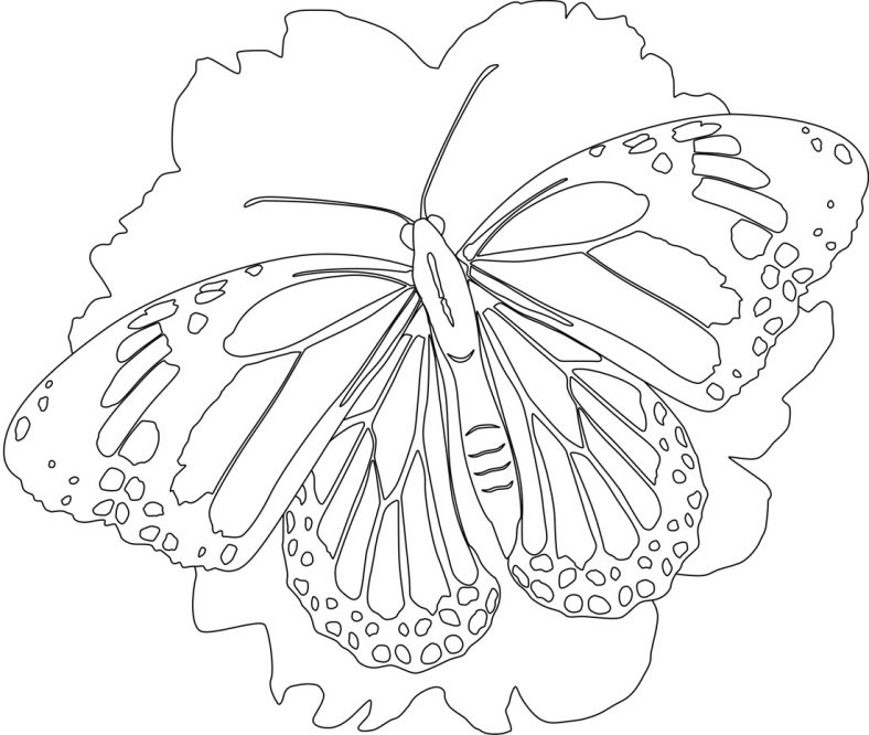 butterfly pictures to color Learning Printable