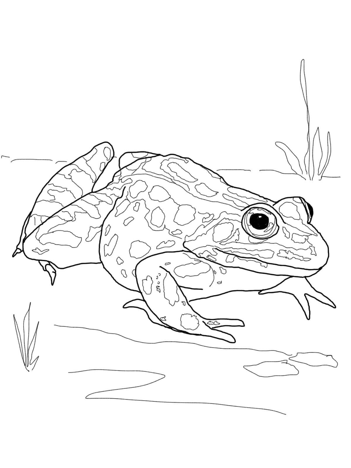 Printable frog coloring pages for kids learning printable for Free printable frog coloring pages