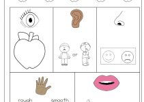 activities for 5 senses page