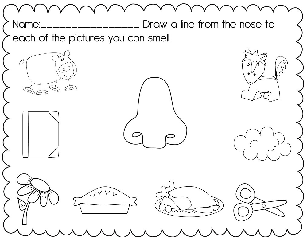 activities for 5 senses practice
