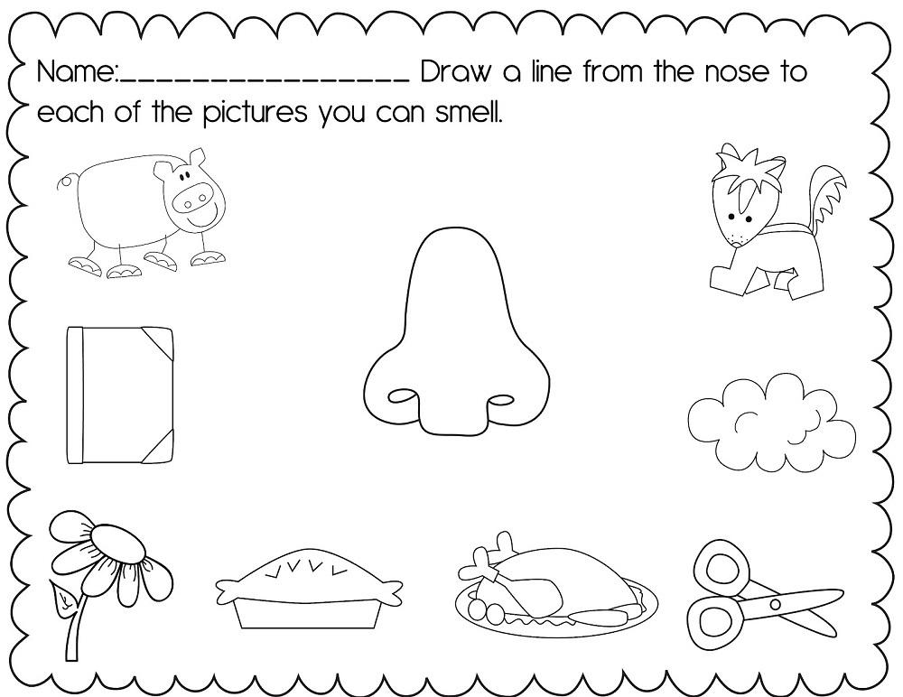 activities for 5 senses practice