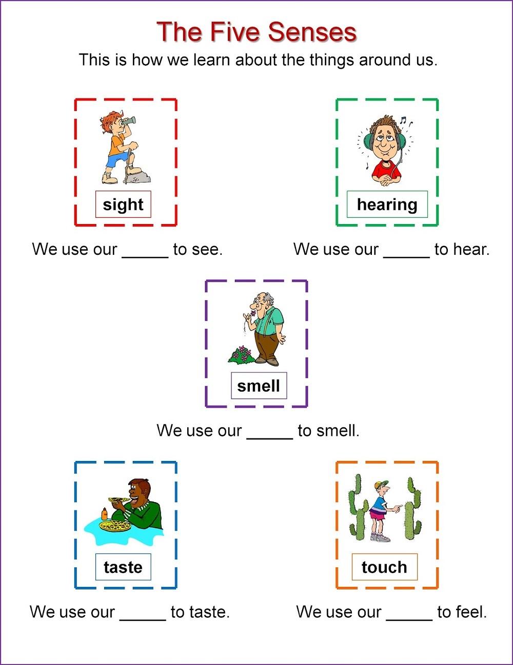 activities for 5 senses sheet