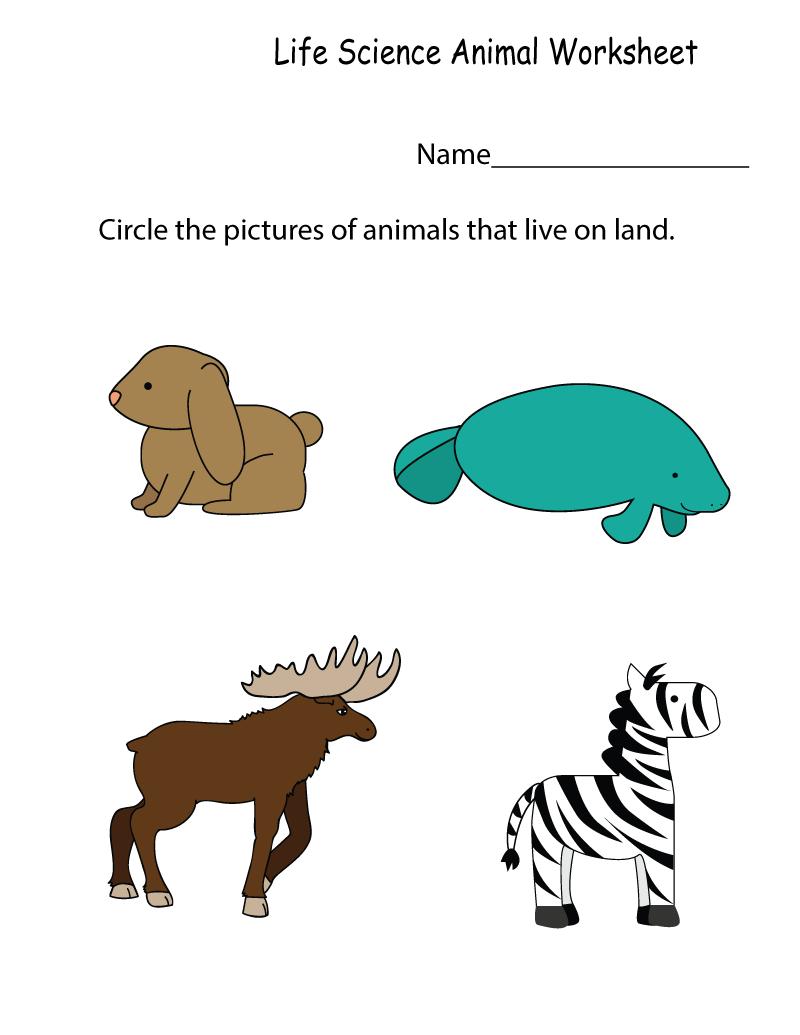 Science Worksheets Kindergarten
