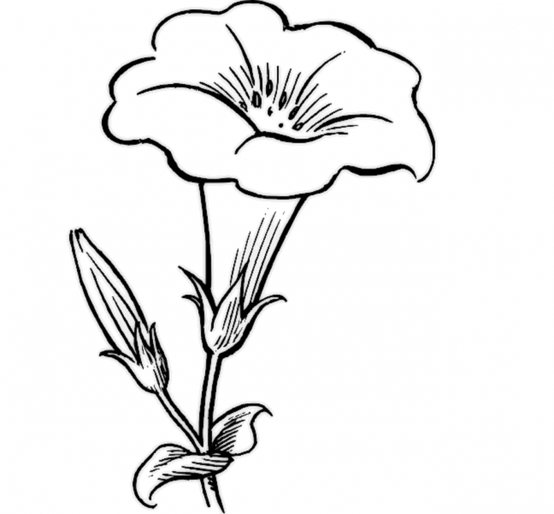 Drawing Pictures for Colouring Flowers