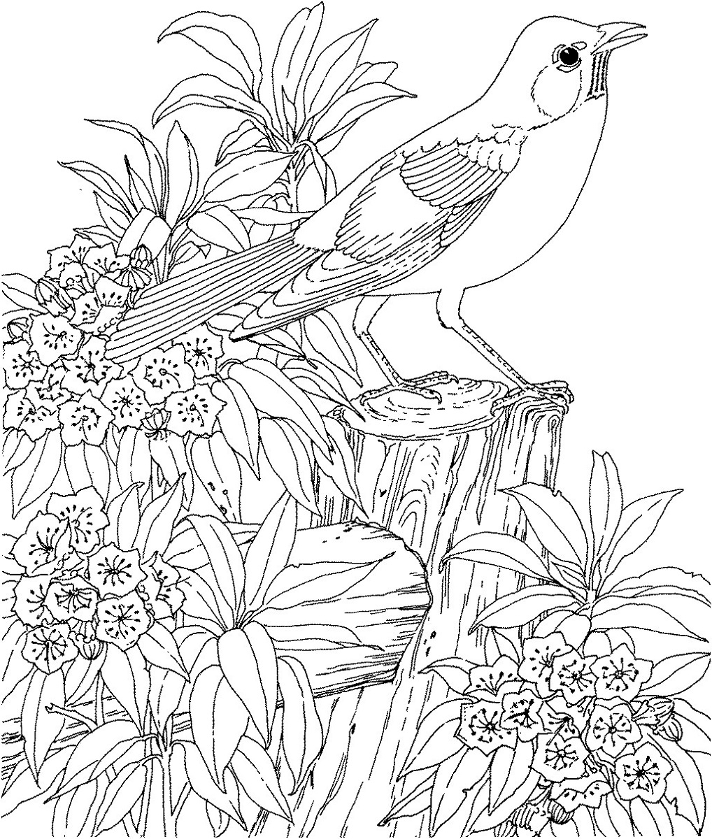 Free Printable Coloring Pages for Adults Animal