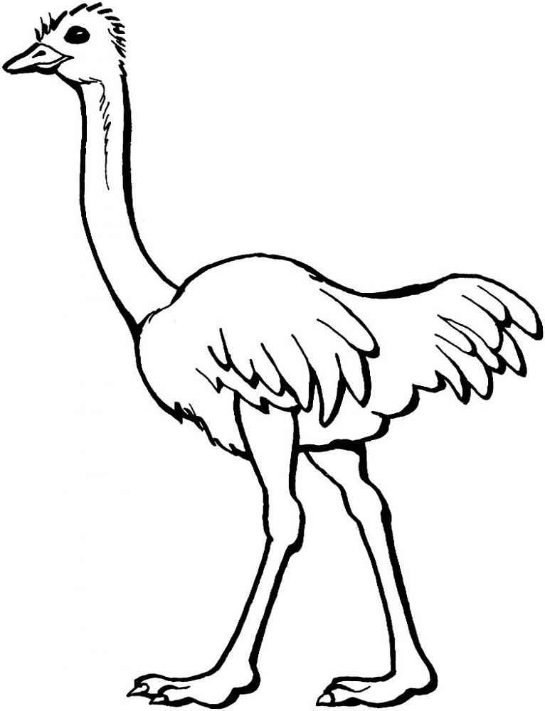Printable Colouring Pictures for Children Ostrich
