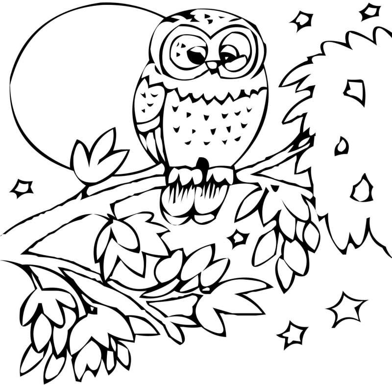 Print Out for Kids Bird
