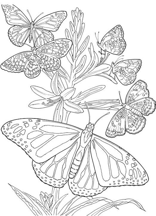 Picture to Coloring Page Adults