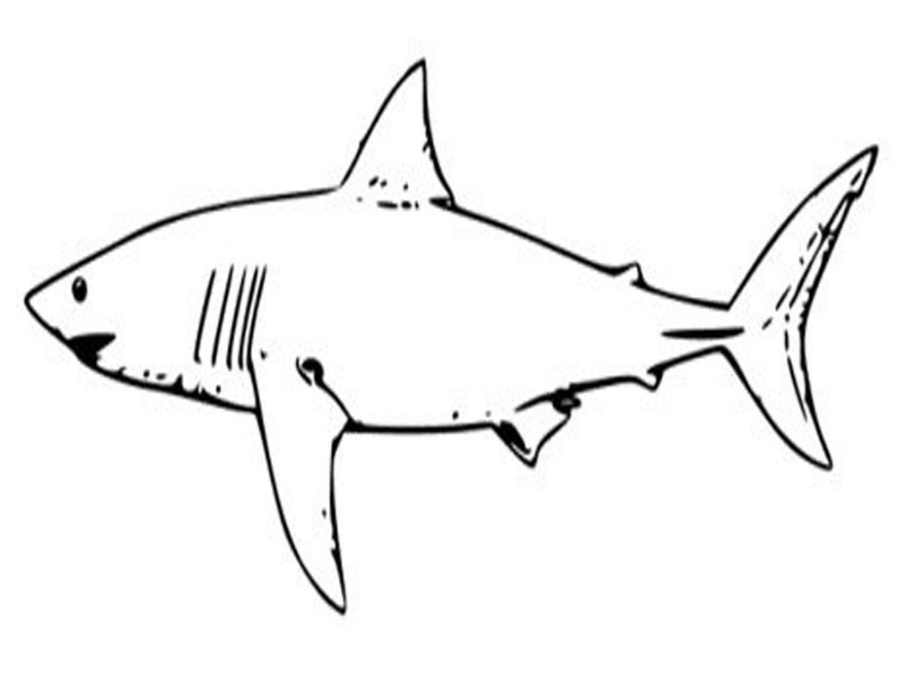 Coloring Sheets for Toddlers Shark