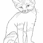 Downloadable Coloring Pages Cat
