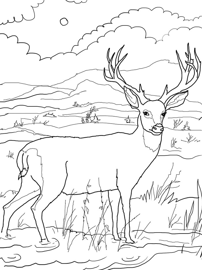 Free Coloring Pictures for Kids Deer