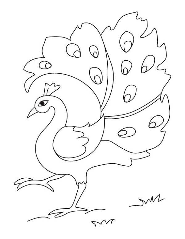 Free Coloring Pictures for Kids Peacock