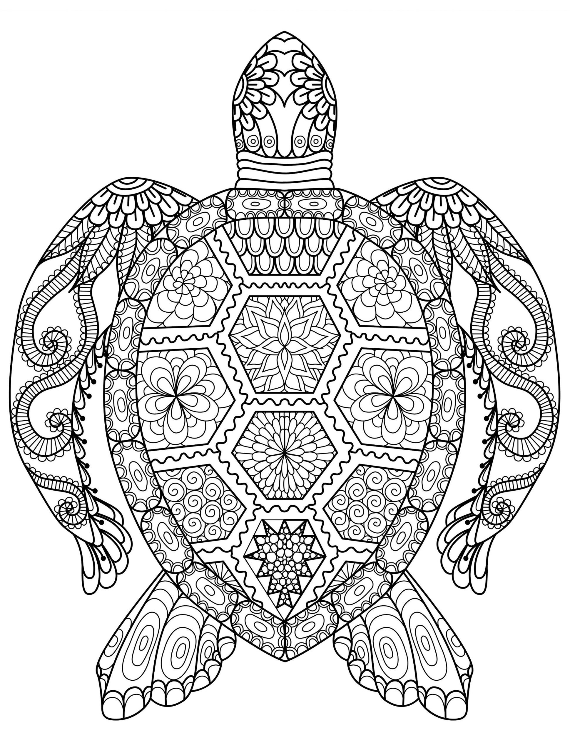 Coloring Book Pages for Kids Turtle