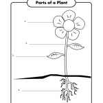 free science worksheets for kids