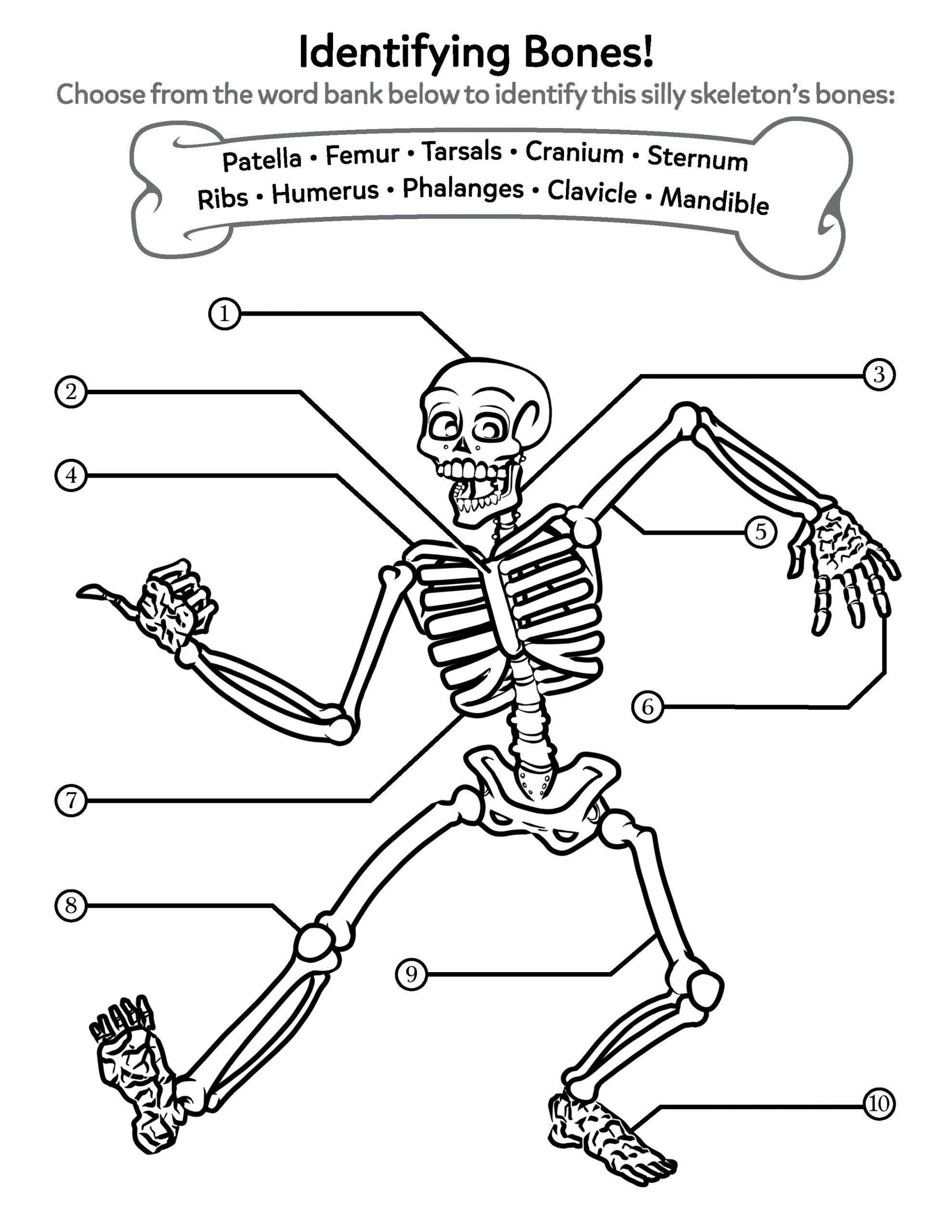 Bones free printable educational worksheets